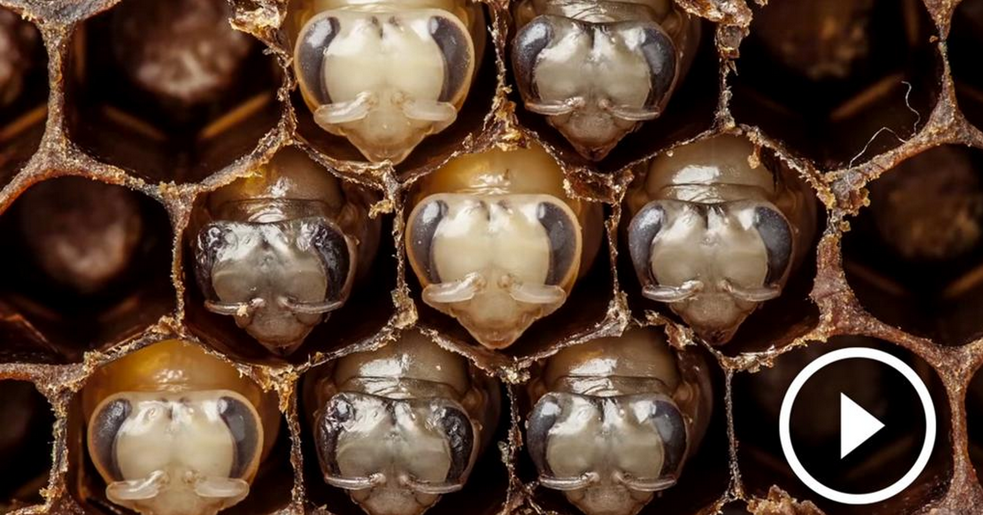 Incredible Bee's Time lapse Video